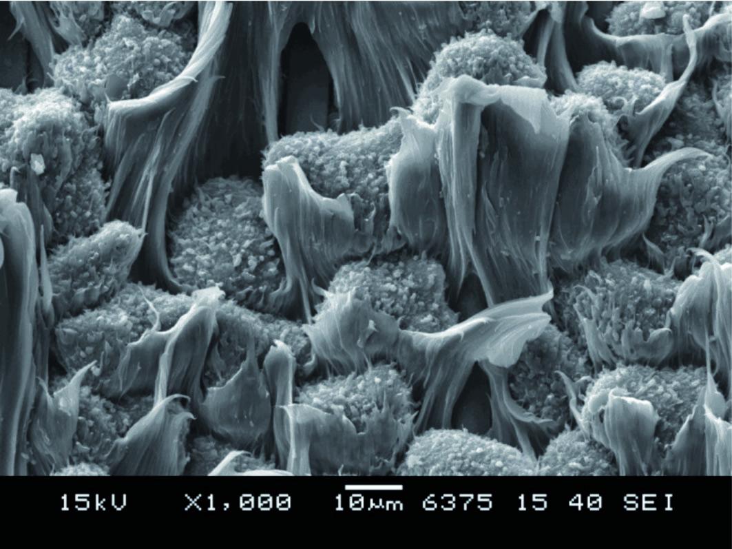 Immagine morfologica: superficie di frattura di resina polimerica composita